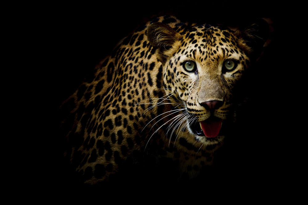 Top 5 Places To See Leopards In South Africa
