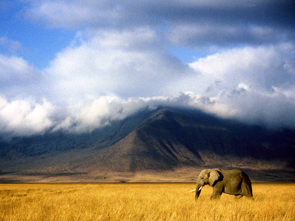 My Top 5 African Wildlife Destinations